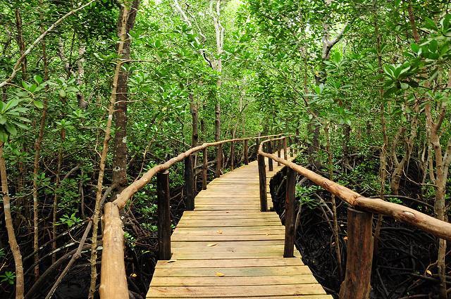 jozani-forest-tour-zanzibar-mangrove-boarwalk